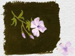 Plumbago capensis (painted by Mary Fedden) 